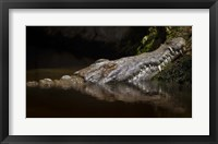 Framed Crocodile Smile