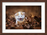Framed Crying In The Leaves