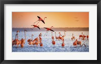 Framed Flamingo Flight