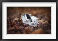 Framed Kitten Twins