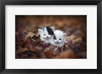 Framed Kitten Twins