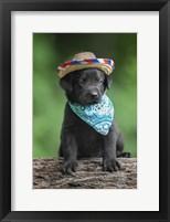 Framed Black Lab Pup 6