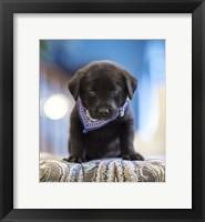 Framed Black Lab Pup 12