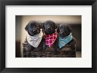 Framed Black Lab Pups 2