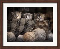 Framed Kittens In A Basket