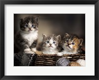 Framed Three Kittens