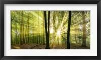 Framed Nebelstimmung mit Sonne im Wald