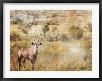 Framed Golden Savanna Antelope