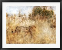 Framed Golden Savanna Cheetah