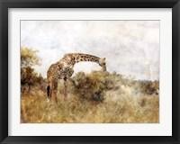 Framed Golden Savanna Giraffe