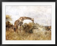 Framed Golden Savanna Giraffe