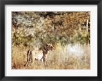 Framed Golden Savanna Lioness