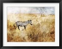Framed Golden Savanna Zebra
