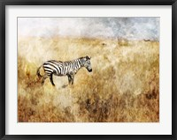 Framed Golden Savanna Zebra