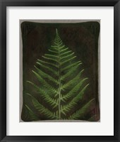 Framed Havana Leather and Lush Fern