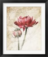 Framed Ravishing Red Bloom