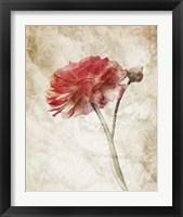 Framed Striking Scarlet Blossom