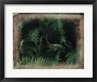 Framed Vintage Framed Lush Ferns