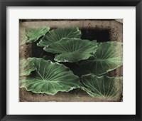 Framed Vintage Framed Lush Hostas