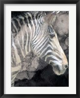 Framed Wistful Zebra Awash