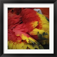 Framed Feathered