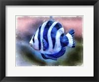 Framed Single Angel Fish