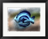 Framed Another Single Angel Fish