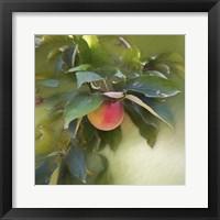 Framed Apple Branch