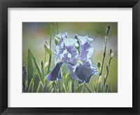 Framed Blue Iris