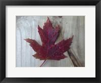 Framed Canadian Impressions