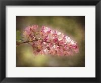 Framed Horse Chestnut Branch