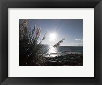 Framed Pampas By The Sea