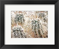 Framed Prickly Protection