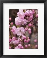 Framed Springalicious Blossoms