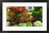 Framed Berm Garden