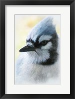 Framed Buzz Two Point O - Portrait Of A Blue Jay