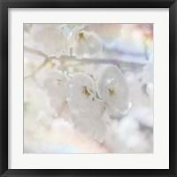Framed Apple Blossoms 01