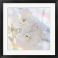 Framed Apple Blossoms 02