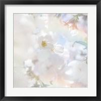 Framed Apple Blossoms 03