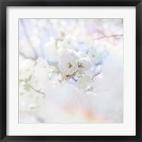Framed Apple Blossoms 04