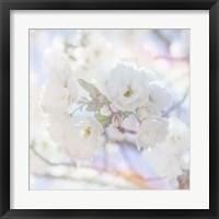 Framed Apple Blossoms 05