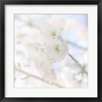 Framed Apple Blossoms 06