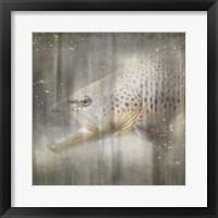 Framed Antique Wildlife Brown Trout