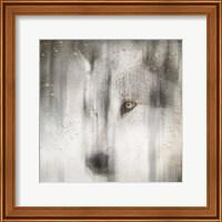 Framed Antique Wildlife Wolf