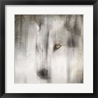 Framed Antique Wildlife Wolf