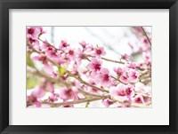 Framed Naturally Cherry 02
