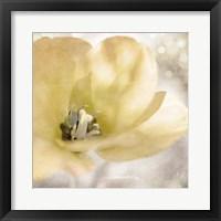 Framed Yellow Tulip 01