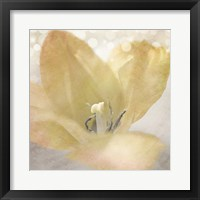 Framed Yellow Tulip 04