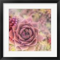Framed Succulents 02