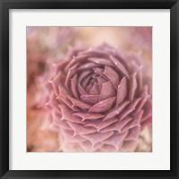 Framed Succulents 03